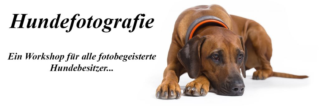 Hundefotografie_Workshop